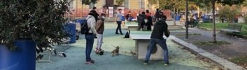 Torneo ping pong piazza Sicilia